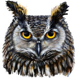 eagle owl digital painting / eagle owl head - 88458670