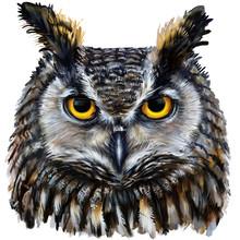 Eagle Owl Digital Painting / Eagle Owl Head