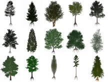 Set Or Collection Of Common Trees - 3D Render