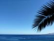 canvas print picture - Palmenblatt vor blauem Himmel über Atlantischem Ozean