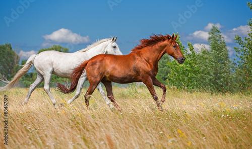 Obraz w ramie two horses