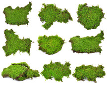 Moss Isolated On White Bakgro...