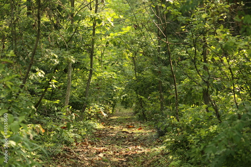 Deurstickers Weg in bos 森の中の道