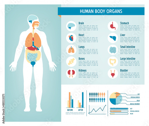 Fotografie, Obraz  Human body infographics