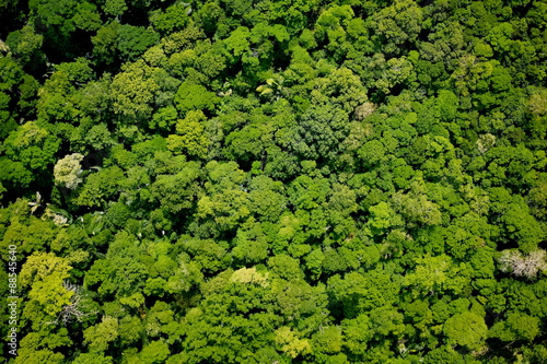 Deurstickers Luchtfoto Aerial view of the forest