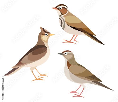 Fényképezés Stylized Birds - Lark, Skylark, Woodlark
