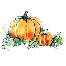 Ripe Orange Two Pumpkins With Green Leaves, Vegetable, Autumn Harvest, Watercolor Sketch