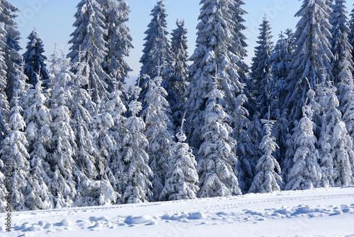 Fototapeta Ośnieżone drzewa. obraz