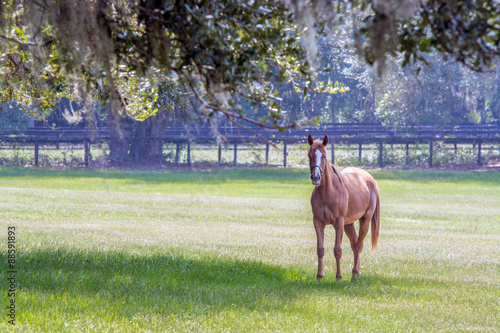 Single horse to the right in a pasture Canvas-taulu