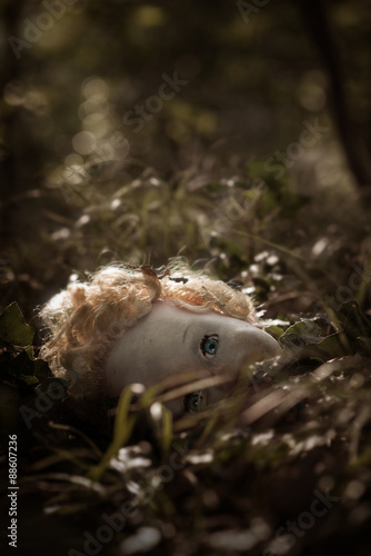 Fotografia  A doll's head lying in the middle of a path of a dark forest