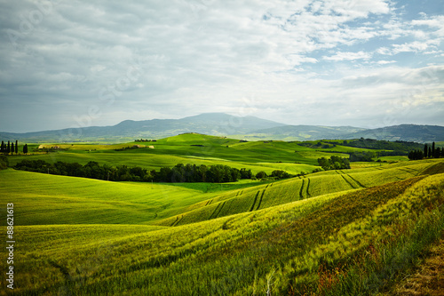 Papiers peints Colline Green Tuscany hills