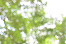 Abstract Blur Soft Green Bokeh Background