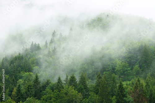 Printed kitchen splashbacks Forest Misty forest