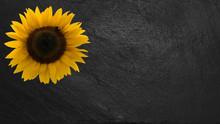Sonneblume Auf Schiefertafel