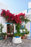 Fototapeta Kwiaty - Street in Milos island, Cyclades, Greece