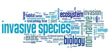 Invasive Species Word Cloud