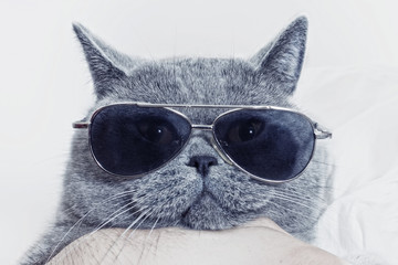 Fototapeta Kot Funny muzzle of gray cat in sunglasses