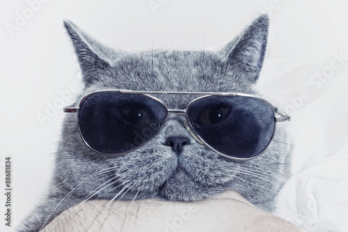 Funny muzzle of gray cat in sunglasses - 88681834