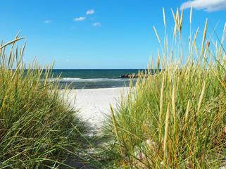 Fototapeta Düne an der Ostsee