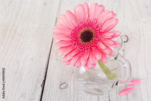 Photo Flower pink gerbera in vase