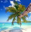 canvas print picture - Palme am Seychellenstrand