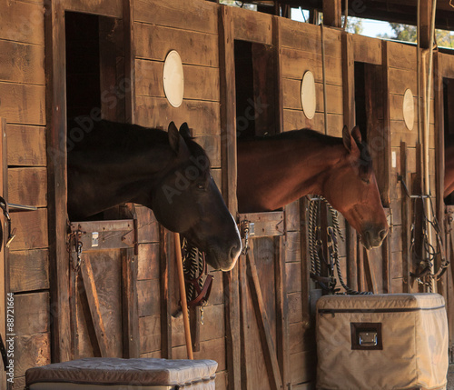 Foto op Canvas Paarden Louisville, Kentucky, United States, — July 2015: Brown bay horse view out the stable in a barn