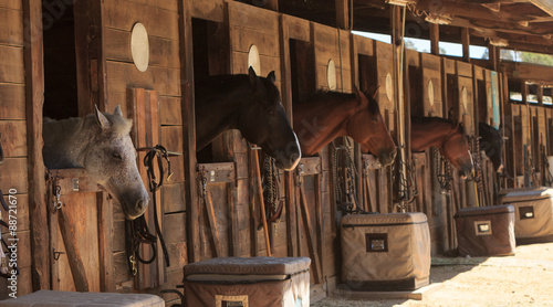 Poster Paarden Louisville, Kentucky, United States, — July 2015: Brown bay horse view out the stable in a barn