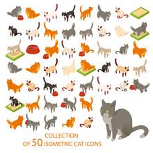 Cat Cions