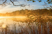 Reeds At The Water's Edge And Autumn Fog On The Lake At Sunrise