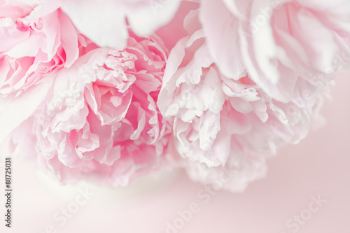 Fresh cut bouquet of Pink Peonies in natural light. Taken from above, pink background.