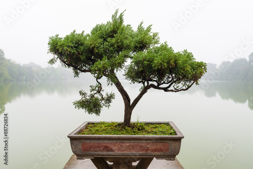 Stickers pour porte Bonsai Chinese green bonsai tree