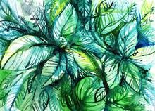 Bundles Of Green Leaves/ Watercolor Illustration