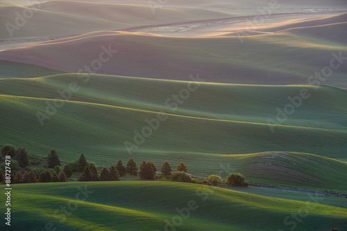 Fototapeta green wheat hill from palouse obraz na płótnie