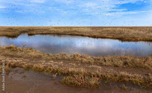 Fotografia, Obraz  Mosquito's swarming
