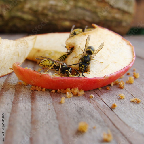 Fotografie, Obraz  Wespen fressen Obst