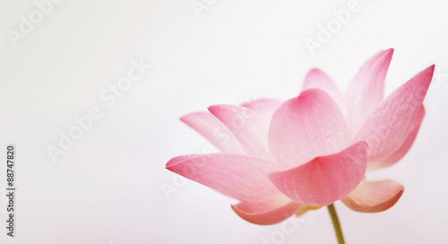 Foto op Aluminium Lotusbloem lotus in soft and vintage color style on mulberry paper texture for background