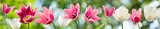 Fototapeta Tulipany - image of beautiful flowers
