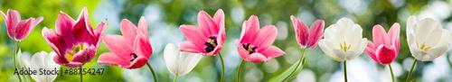 Photo  image of beautiful flowers