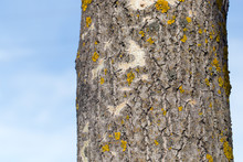 Yellow Moss On The Tree