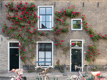 House Wall With Front Doors, Windows And Climbing Rose, Parked Bicycles, In The Old Center