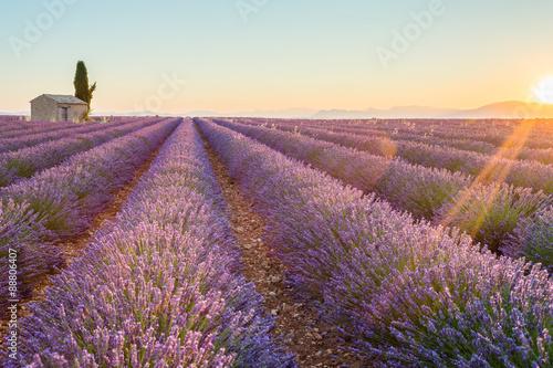 Schilderijen op glas Landschap France, Valensole Plateau, Provence, Europe. Lavender field, sunset and flowering