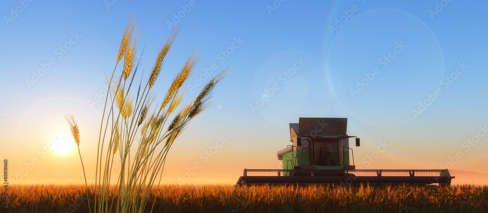 Fototapety, obrazy: wheat harvester
