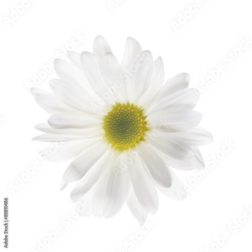 In de dag Madeliefjes Flower