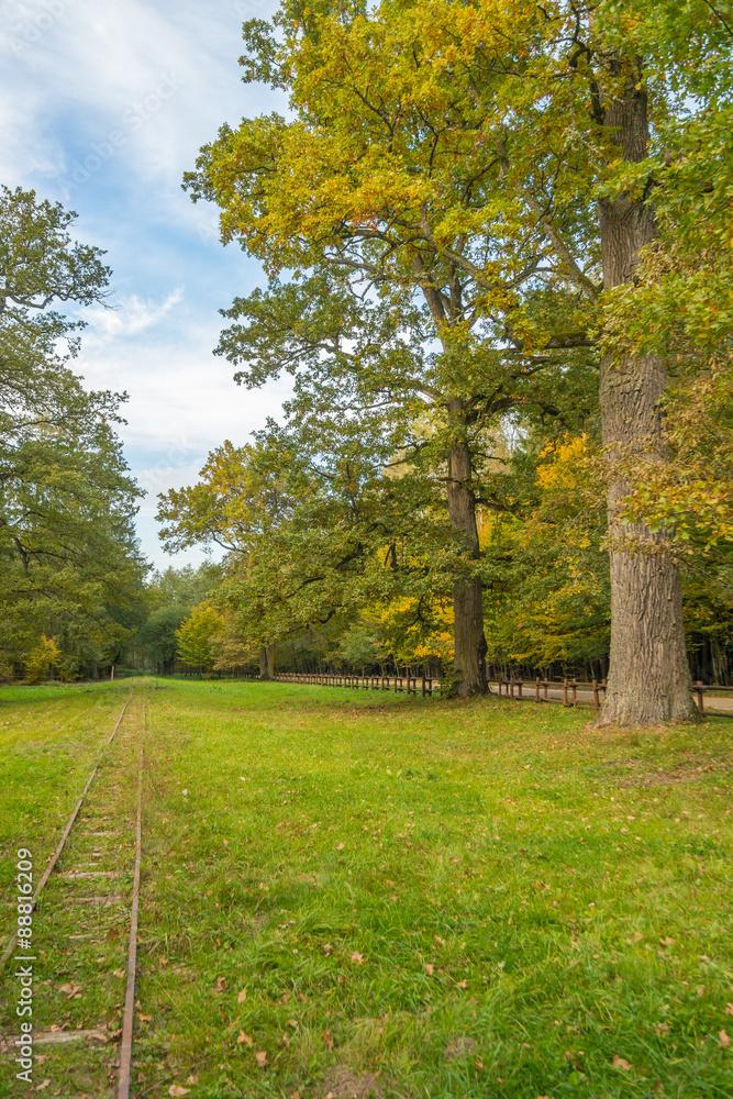 Fototapeta Landscape Bialowieza Forest