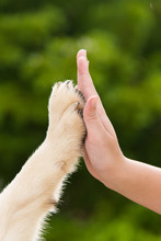 Give Me Five -Puppy Pressing H...