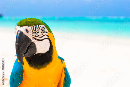 Adorable bright colorful parrot on the white sand in the