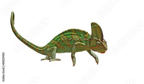 Staande foto Kameleon chameleon or calyptratus isolated on white