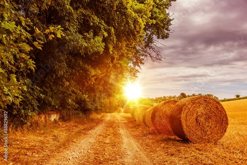 obraz dibond Countryside Summer Road