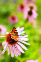 Colorful Butterfly On Flower P...