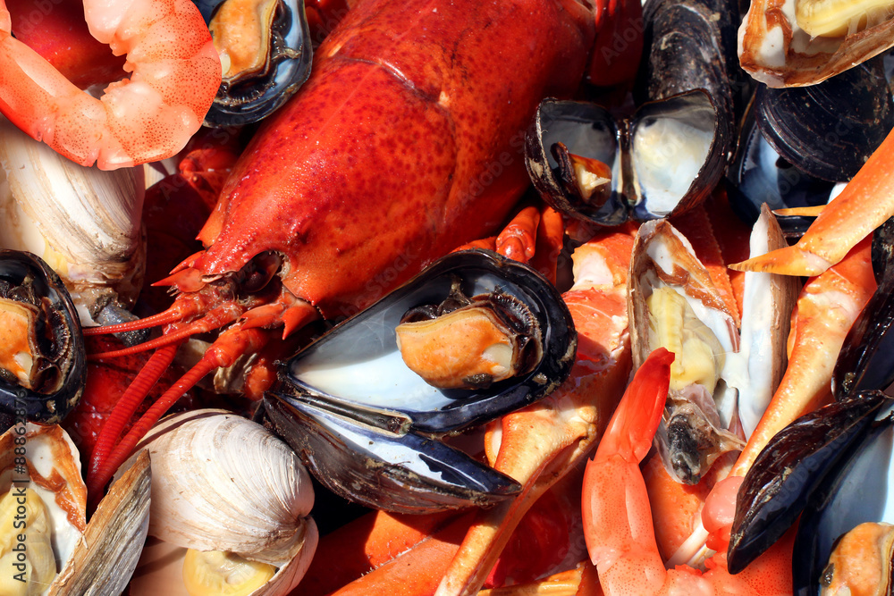 Photo  Shellfish